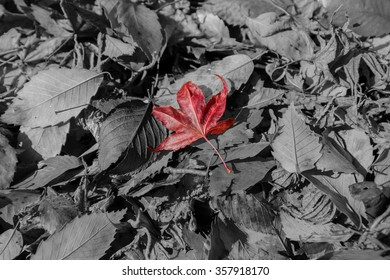 Maple leave on the ground.