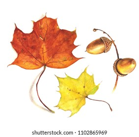 Maple leaves and acorns