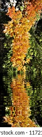 maple leaves in autumn,  photography with reflection in the water,peace, harmony, tranquility, serenity, meditation, transcendence, relaxation, balance,
