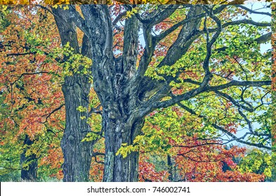 Maple leaves in every stage of color from green to yellow to orange to red