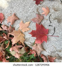 Maple leaves in Mississauga🍁 Fall is not felling, but the symbol of orange, implying hopes and dreams.