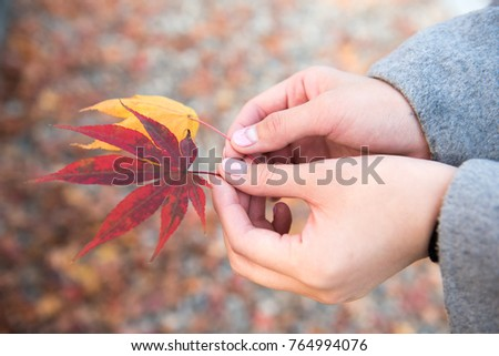 Maple leaves and hands of woman