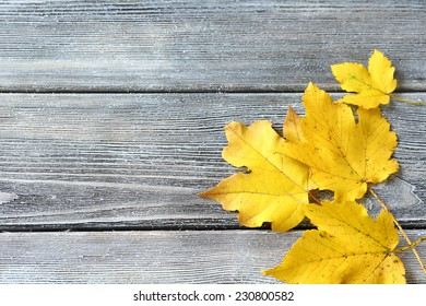 Maple leaves on the boards, wooden background