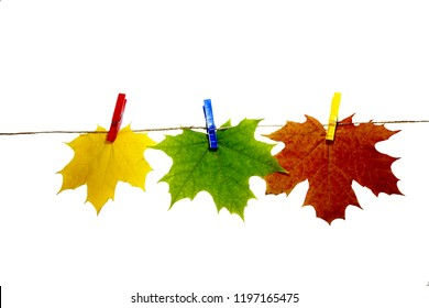 Maple leaves on clothespins with the word autumn, isolated on white background.
