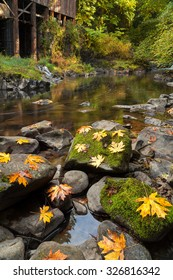 Maple Leaves on Moss Covered Rocks at Cedar Creek Grist Mill in Washington State during Fall Season