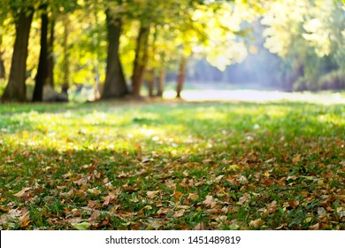 Maple leaves in the park in autumn