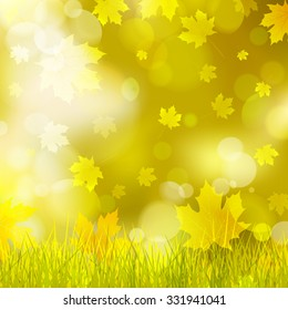 maple leaves, yellow grass, background bokeh