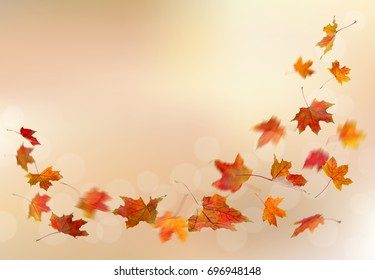 Maple red autumn falling leaves, isolated on natural background.