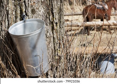 Maple Sap Bucket to harvest sap from maple trees to make maple syrup
