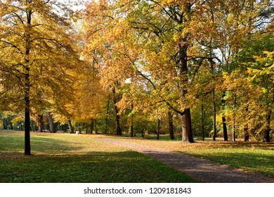 Maple strees in the park in the autumn