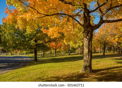 Maple tree in autumn colors on Mount-Royal in Montreal, Canada.
