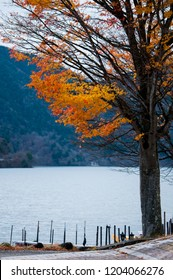 A maple tree by the lake of Nikko, Japan in the fall season.