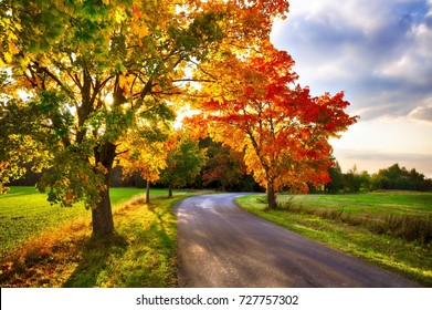 Maple tree with colored leafs and asphalt road at autumn/fall daylight.Relaxing atmosphere. Countryside landscape.