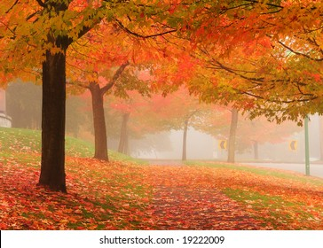 maple trees in autumn, Deer Lake Vancouver, Canada