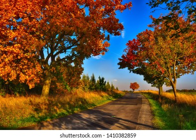 Maple trees with coloured leafs along asphalt road at autumn/fall daylight. Countryside landscape, sunlight,blue sky. Czech Republic,Europe. HDR image.