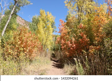 Maple trees show their yellow and red leaves early in the fall in the Wasatch Mountains