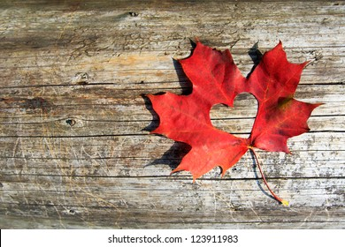 Maple-Leaf to cut the heart on the tree. Valentine Love Leaf.