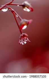 The maple's little head is holding onto a raindrop