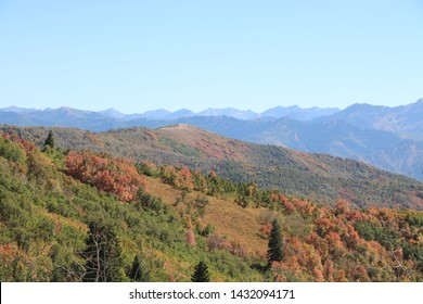 The maples of Wasatch mountains start to show their fall foliage by mid September