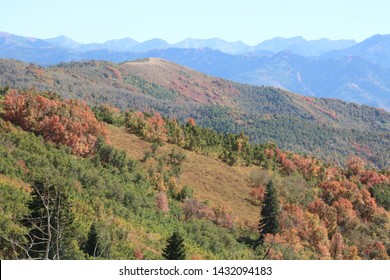 The maples of Wasatch mountains start to show their fall foliage by mid September in the high country.