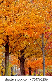 Maplewood Cemetery in Autumn at Harrison, Arkansas