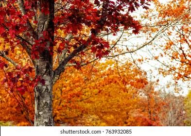 Maplewood Cemetery at Harrison, Arkansas in Autumn