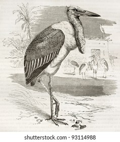 Marabou Stork old illustration (Leptoptilos crumeniferus). Created by Kretschmer and Schmid, published on Merveilles de la Nature, Bailliere et fils, Paris, ca. 1878