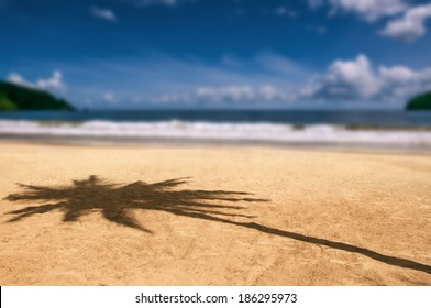 Maracas bay Trinidad and Tobago beach palm tree shadow Caribbean blurry background