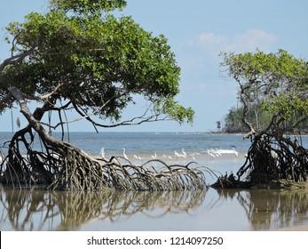 marajo island para brazil