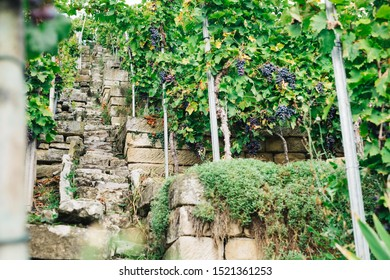 Marbach am Neckar, Baden-Württemberg / Germany - September 26 2019: Stone staircase steps in a quaint German winery vineyard on a steep hillside