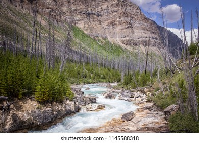 Marble Canyon hike in Kootenay National Park in Canada. A forest fire in 2003 burned many of the trees in this area.