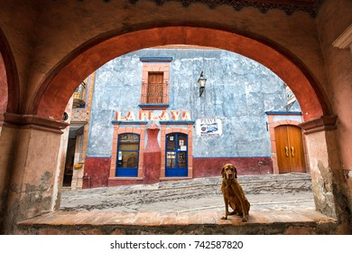 March 1, 2016 Bernal, Queretaro, Mexico: dog sitting under arch in idyllic Spanish architecture in  the historic town center