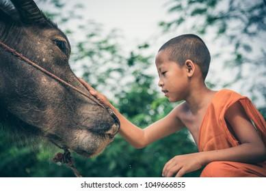 March 17,2018 Novice Monk raising the buffalo in Chiang Saen,Chiang Rai,Thailand.Vintage color tone.