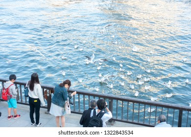 March 2018 - Tokyo, JAPAN: Tourist watching and feeding ducks by the  Sumida river, Japan, a tourist spot in Tokyo.