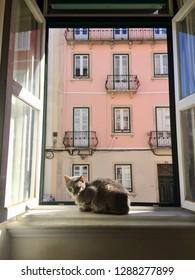 March 26th, 2017- Lisboa, Portugal: Cat sleeping in an open sunny windowsill in Lisboa, Portugal