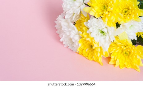 March 8 Women's Day card. Bouquet of white and yellow chrysanthemums on a pale pink background