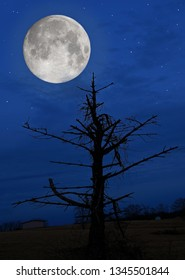 A March supermoon over a dead tree in Guernsey county, Ohio.