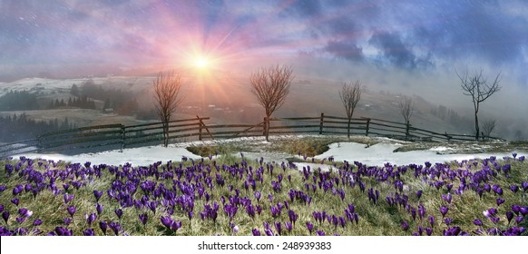 In March-April after a winter in the mountains of unstable weather, and replaced by the warmth, the sun can come quickly alpine cold, strong wind and sleet and then freezing plants and flowers