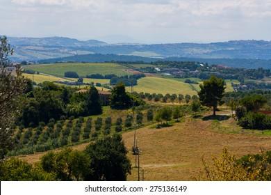 Marche's hills, Marche, Italy