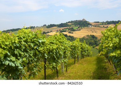 Marches (Italy) - Landscape at summer: vineyards