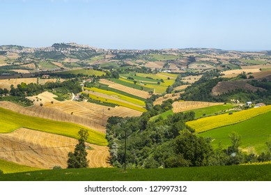 Marches (Italy) - Landscape with sunflowers near Fermo and Monterubbiano at summer