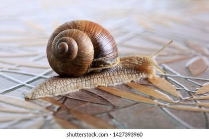Marco close-up of snail with brown shell