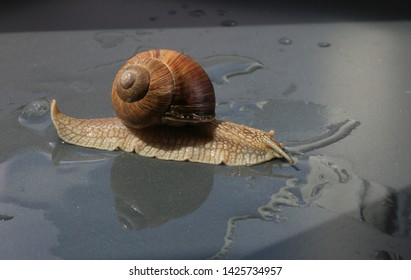 Marco close-up of snail on concrete