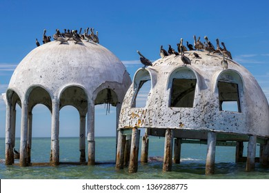 MARCO ISLAND, FLORIDA: 1 March 2019 - Wreck of Famous Dome Houses in the Sea with Pelicans on top