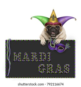 Mardi gras pug dog with carnival hat, beads and venetian mask hanging on blackboard sign with text, isolated on white background