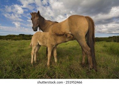 mare feeding her baby