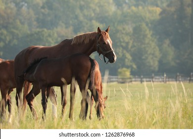 The mare is feeding offspring on the meadow.