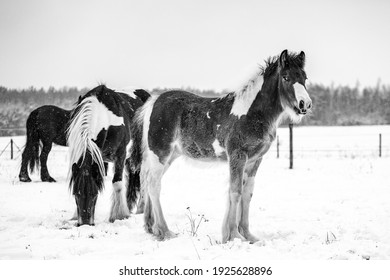 A mare with a foal gallops in the snow