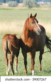 Mare and foal in green pasture.