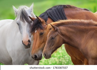 Mare and foal in herd on spring pasture